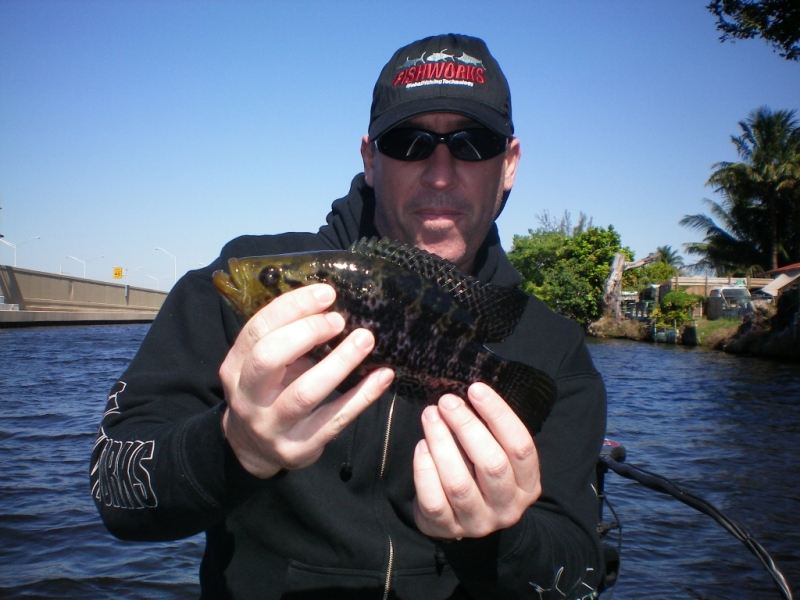 Florida Peacock Bass Fishing in South Florida