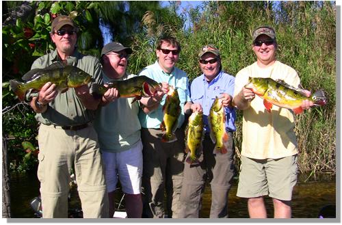 Peacock Bass in South Florida