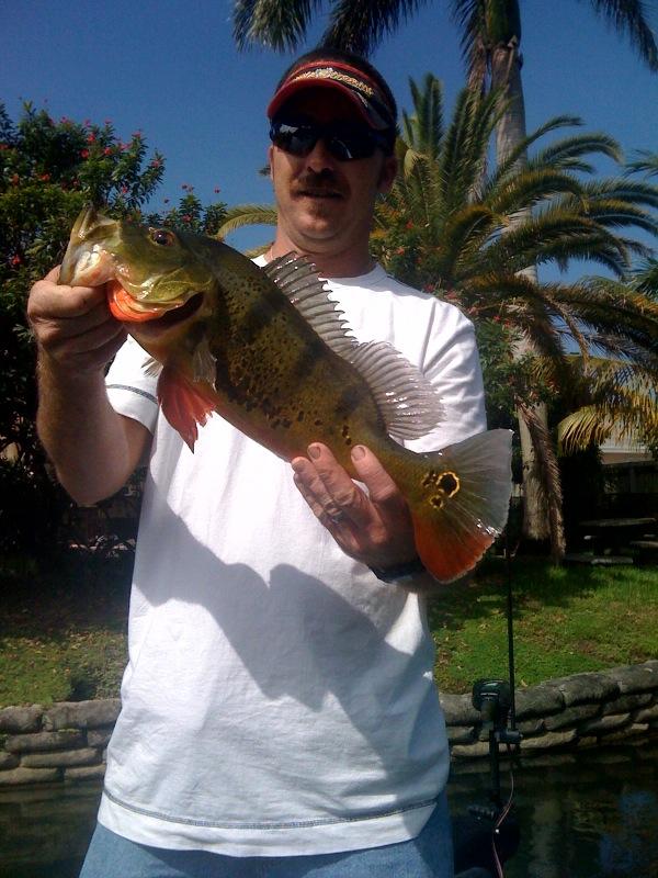 Fun in florida peacock bass fishing peacock bass fishing for Peacock bass fishing florida