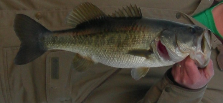 bassfishingguideorlando.com