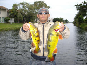 Tamiami canal airport lakes peacock bass fishing in miami for Fishing spots in fort lauderdale