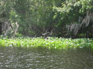 Lake Woodruff