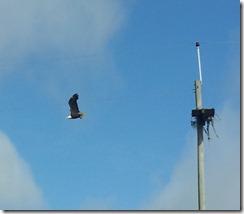 20120919_100207 eagle