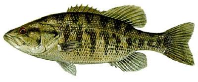 Suwanne Bass