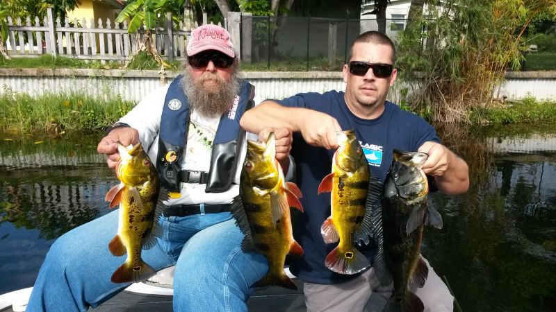 Tony Masiello South Florida Peacock Bass Report