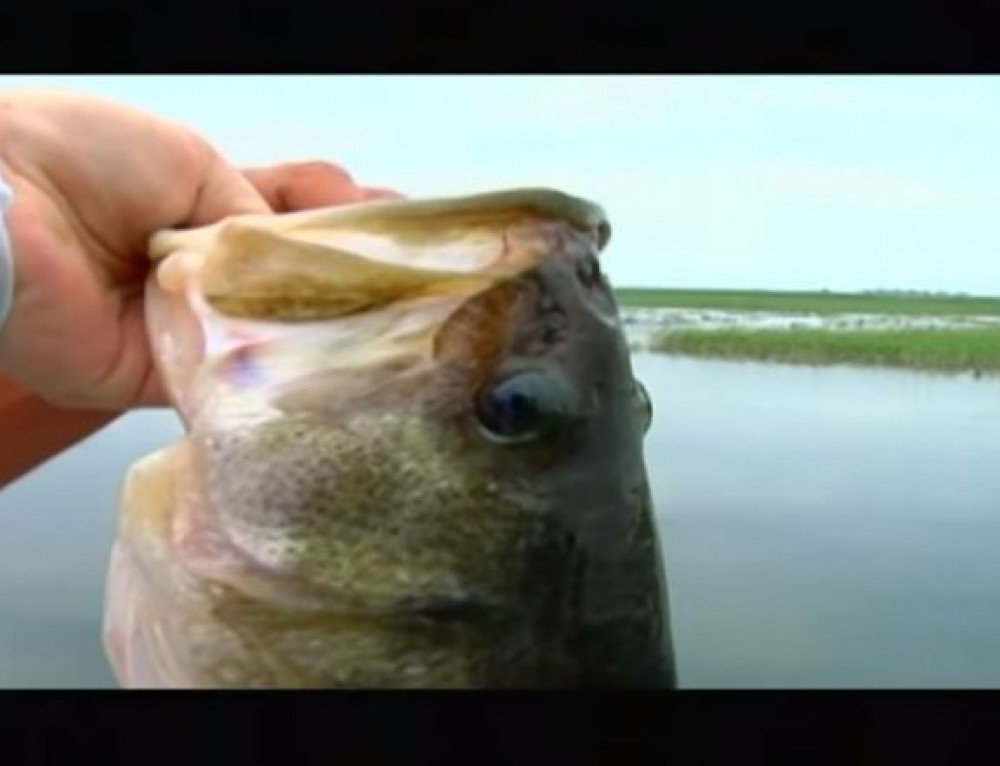 ESPN Fishing on Lake Okeechobee with Rods and Wheels TV Series