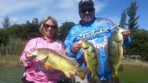 Peacock Bass Trips Lake Ida