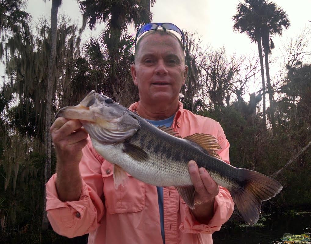 St Johns River bass