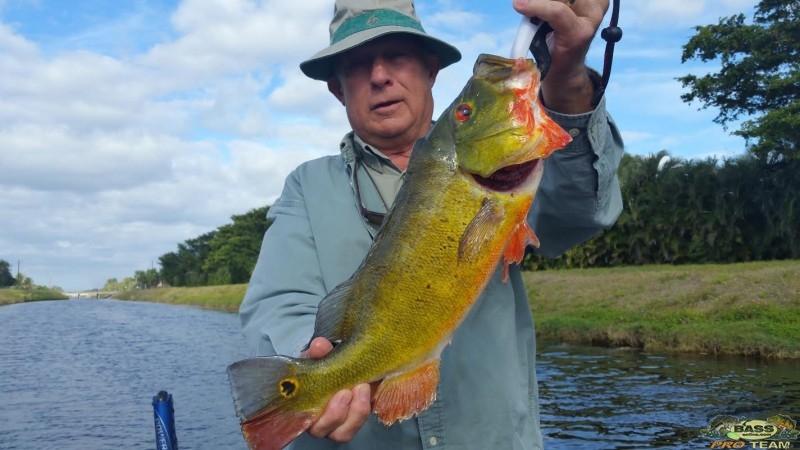 Florida Peacock Bass Fishing Capt Robert Miley