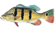 Cape Coral Fishing Trips