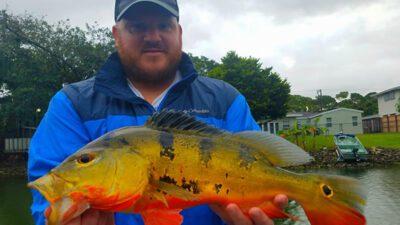 Outstanding Peacock Bass Fishing 3