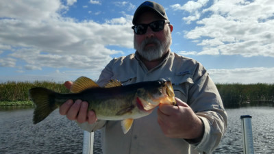 Current February Okeechobee Report 2